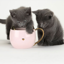 Chloe Cat Ear Ceramic Tea and Coffee Mugs-Home - Coffee + Tea - Mugs-PINKY UP-Black-Peccadilly