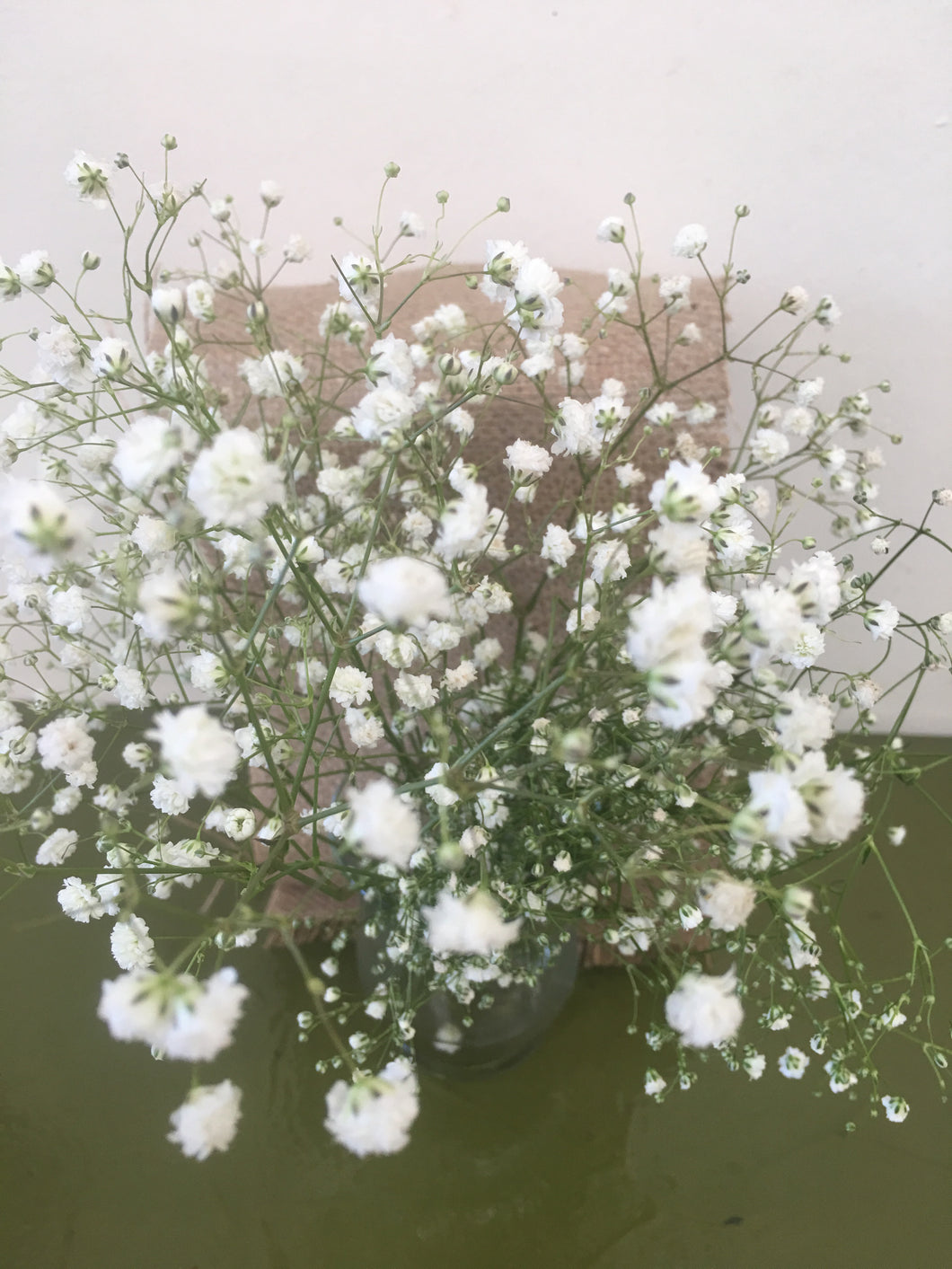 Baby's Breath - gypspholia NEW PRODUCT
