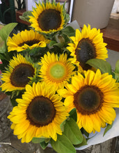 sunflowers asap delivery gold coast