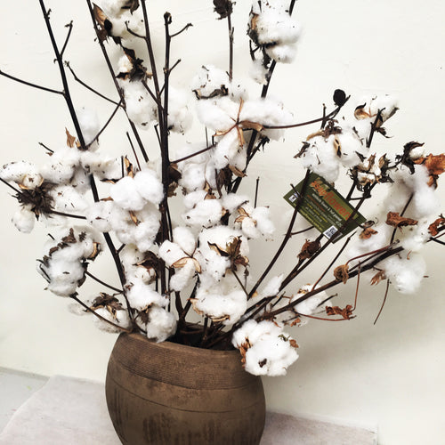 Cotton dried - styled bouquet 3 - 8 stem options
