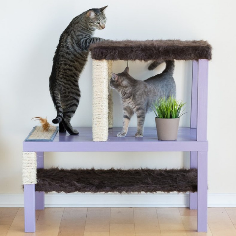 The Best DIY Projects for Your Kitty Cats