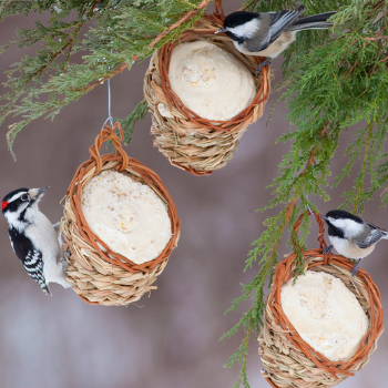 5 Amazing Ways to Make a DIY Bird Feeder