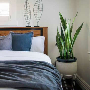 Best Plants for the Bedroom to Help You Sleep Better