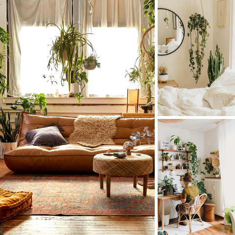 Energize Your living Space With Hanging Plants