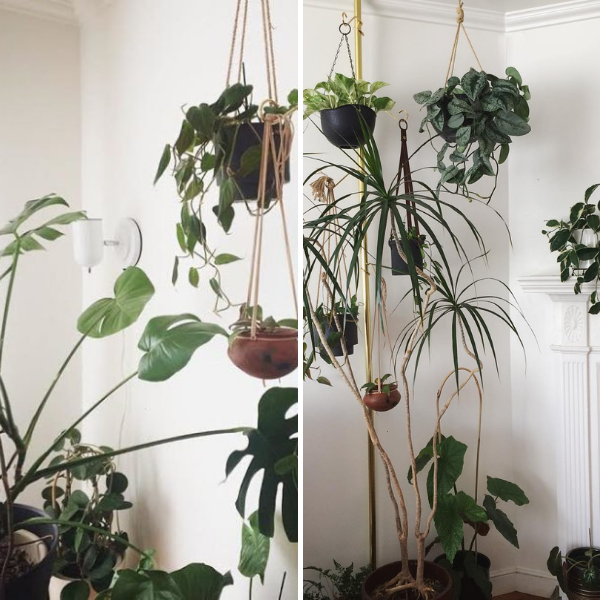 hanging plants in the corner