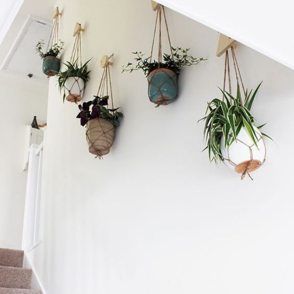 planting plants on the wall