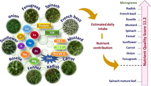 Nutrient composition, oxalate content and nutritional ranking of ten culinary microgreens