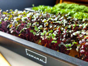 Meet Your Microgreens!