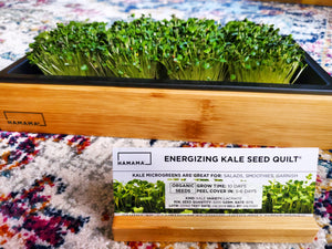 Diary of an Energizing Kale Microgreen!