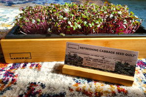 Diary of A Refreshing Cabbage Microgreen