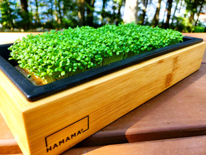 Diary of an Earthy Clover Microgreen!