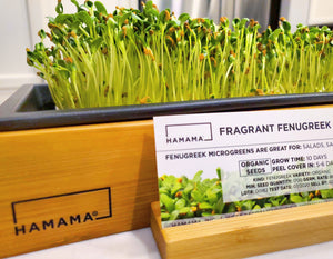 Diary of A Fenugreek Microgreen!