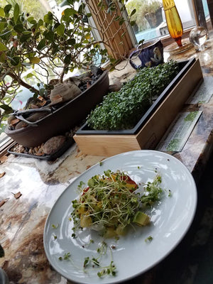 Stephanie Manganello Ida‎_Broccoli Microgreen Avocado Salad_HamamaRecipes_9.11.19