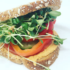 Fenugreek microgreens sandwich with bell peppers, cucumber, hummus, and whole wheat bread.