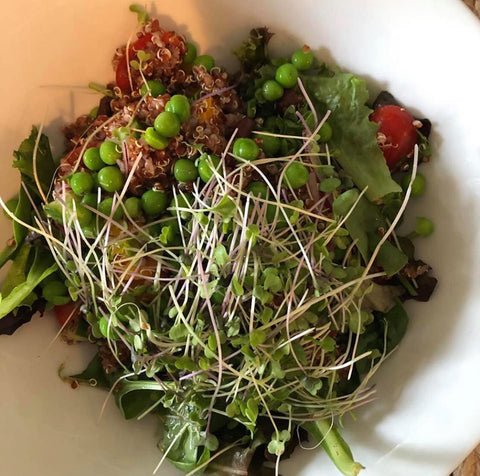 JodiMayer_BlackBeanQuinoa Super Salad_HamamaRecipes_9.11.19