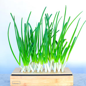 Green Onion Kit