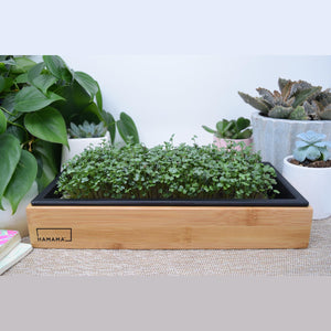 Hamama--Grow Kit and Bamboo Frame