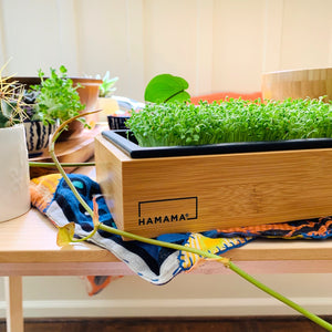 Hamama -- Grow Kit and Bamboo Frame