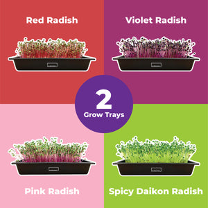 Radish Sampler with 2 Grow Trays