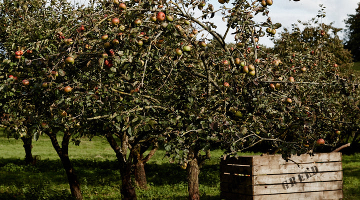Apples & Orchards at Home Farm