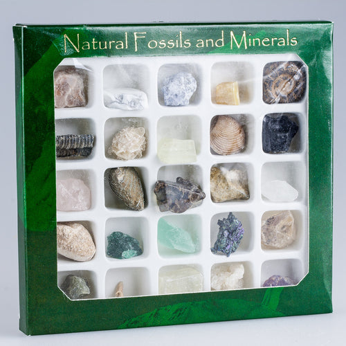 Natural Fossil and Minerals Box Set