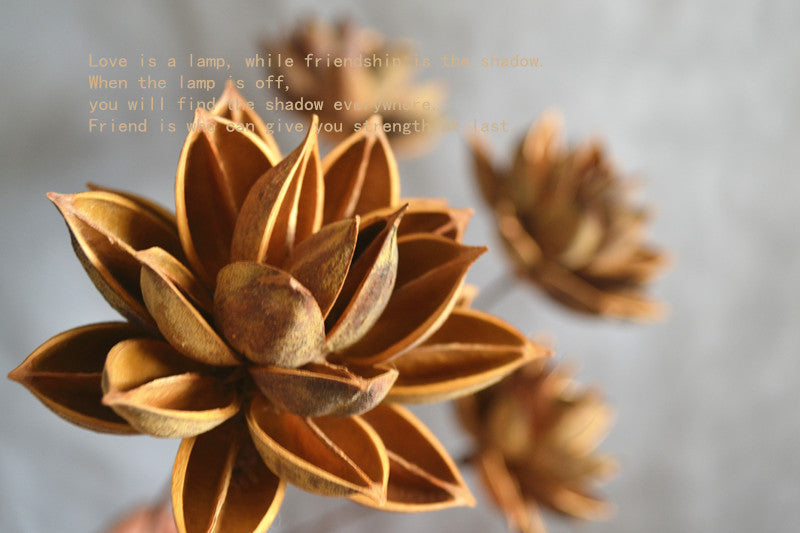 Dry lotus flowers dried flowers home furnishings natural entrance dry lotus flowers dried flowers home furnishings natural entrance table mightylinksfo