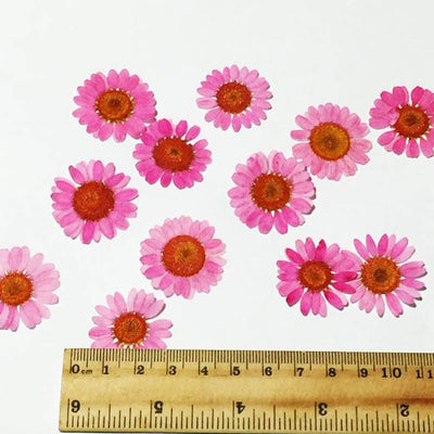 14 Kinds Dried Flowers For Wax DIY Gift Decoration Artificial Flowers