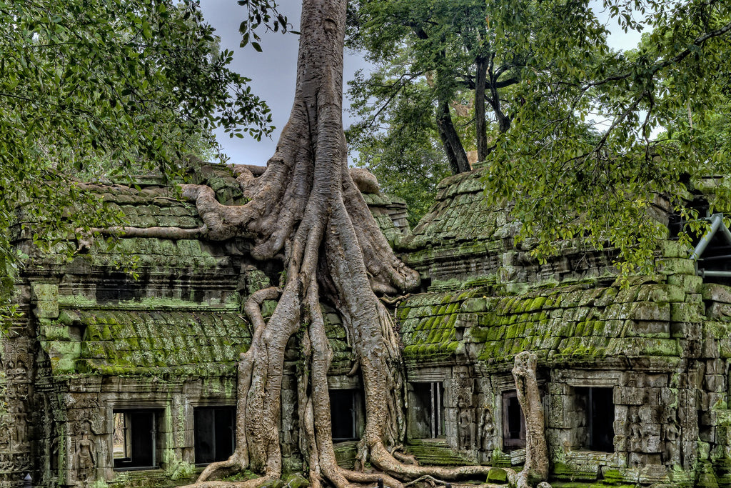 Meditation Is Not Enough To Achieve Growth - This Is Why - picture of a big tree growing over old moss-covered houses and its roots revealed