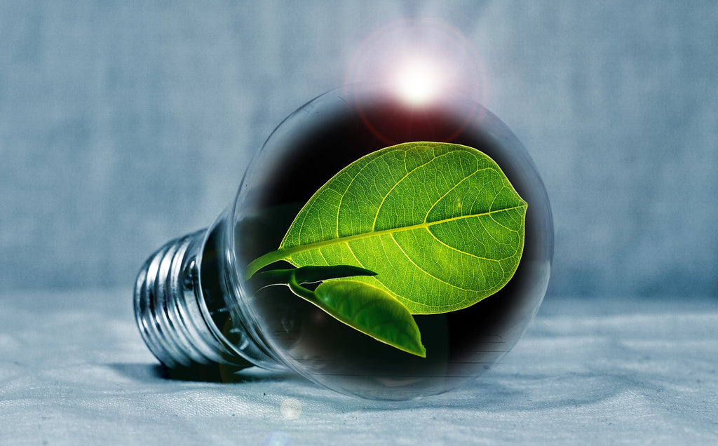 ONE simple step to improve your sleep and ultimately take your life to the next level - picture of a bulb with a green leaf inside