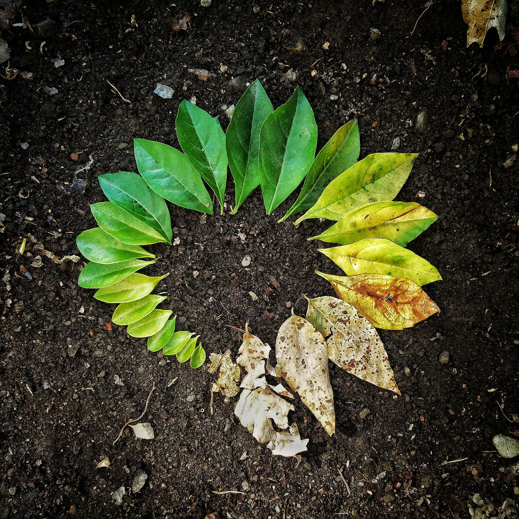 Leaves laid in a circle. Each leaf picked at different season. Cyclic living