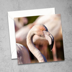 Chloe Stevens Photography Greater Flamingo Greeting Card