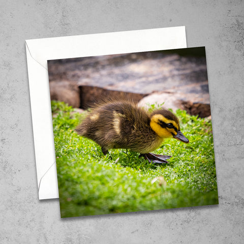 Chloe Stevens Photography Mallard Duckling Greeting Card
