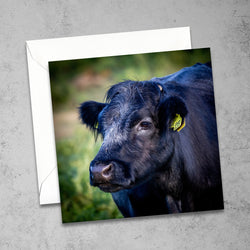 Chloe Stevens Photography New Forest Cow Greeting Card