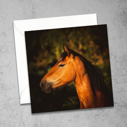 Chloe Stevens Photography New Forest Pony Greeting Card