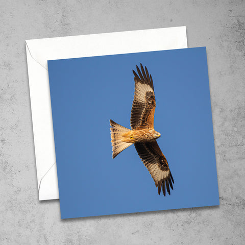 Chloe Stevens Photography Red Kite Greeting Card