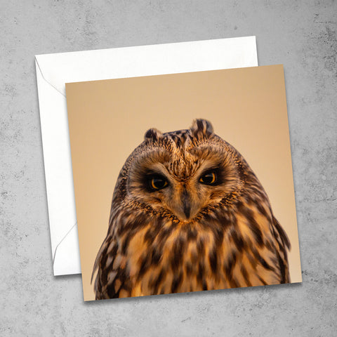 Chloe Stevens Photography Short-Eared Owl Greeting Card