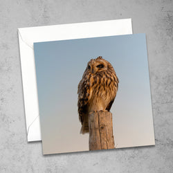 Chloe Stevens Photography Short-Eared Owl At Sunset Greeting Card
