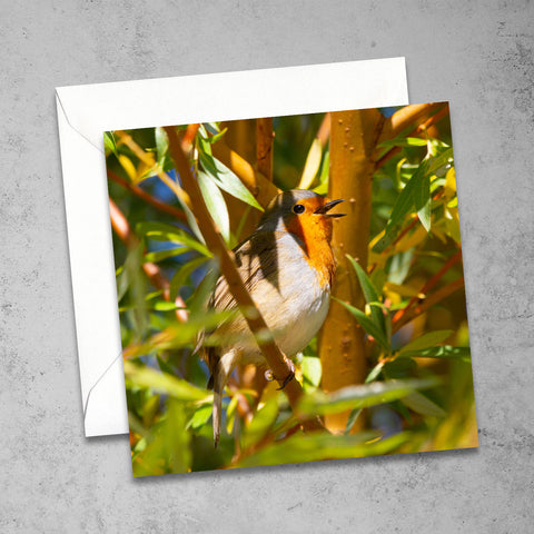 Chloe Stevens Photography Singing Robin Greeting Card