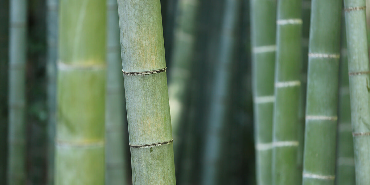 8 Bamboo Must-Haves