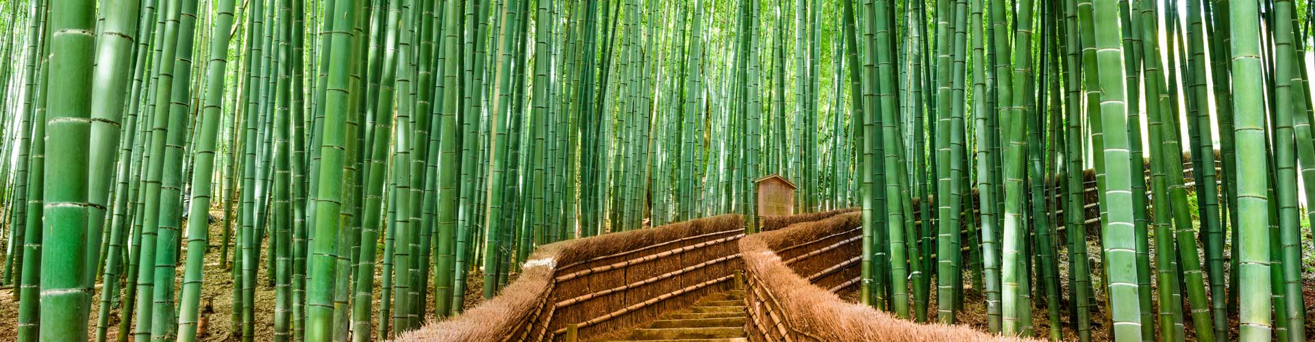 Bamboo - is a raw material of natural origin, has long been used by man in everyday life. More than two centuries ago it was used for the construction of houses, bridges, boats, home paraphernalia, musical instruments. In eastern medicine, the plant was used as a sedative and cosmetic 78