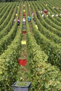 2018 - Champagne Harvest of the Century?