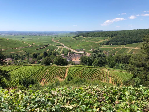 View from Pernand Vergelesses over the Cotes de Beaune