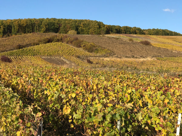 Autumnal champagne vineyards post harvest 2018