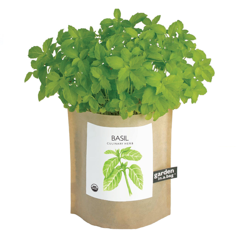 Plant | Basil Garden In A Bag