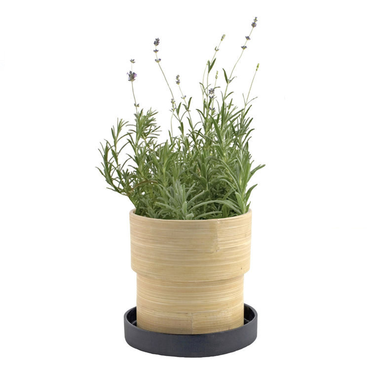 Plant | Lavender Bamboo Grow Pot