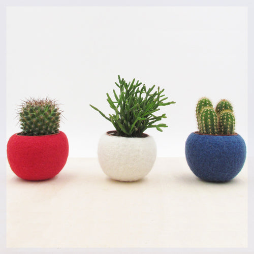 Succulent planter collection in Red White, and Blue