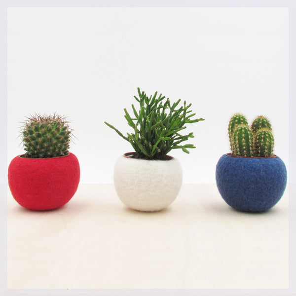 4th of July decor/patriotic decor/Independence day usa flag colors/succulent planter collection/Red White Blue/Succulent terrarium