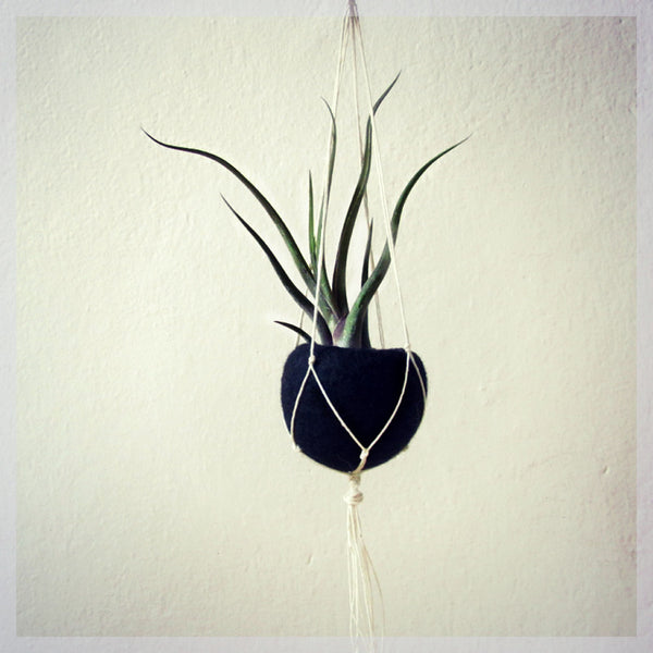 Air planter gift/Macrame hanger planter/Hanging planter/Black Felt planter/minimalist home decor/Choose your color!