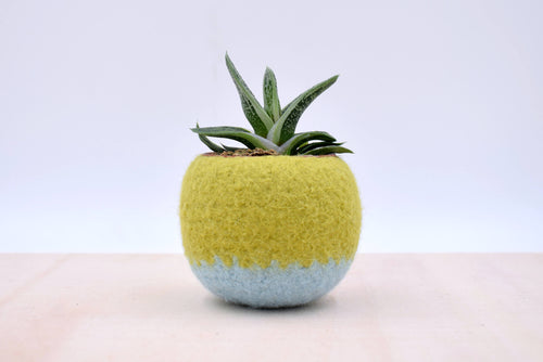 Succulent planter/Felt plant vase/felted bowl/Succulent pod/windowsill planter/ gift for her/7th anniversary gift