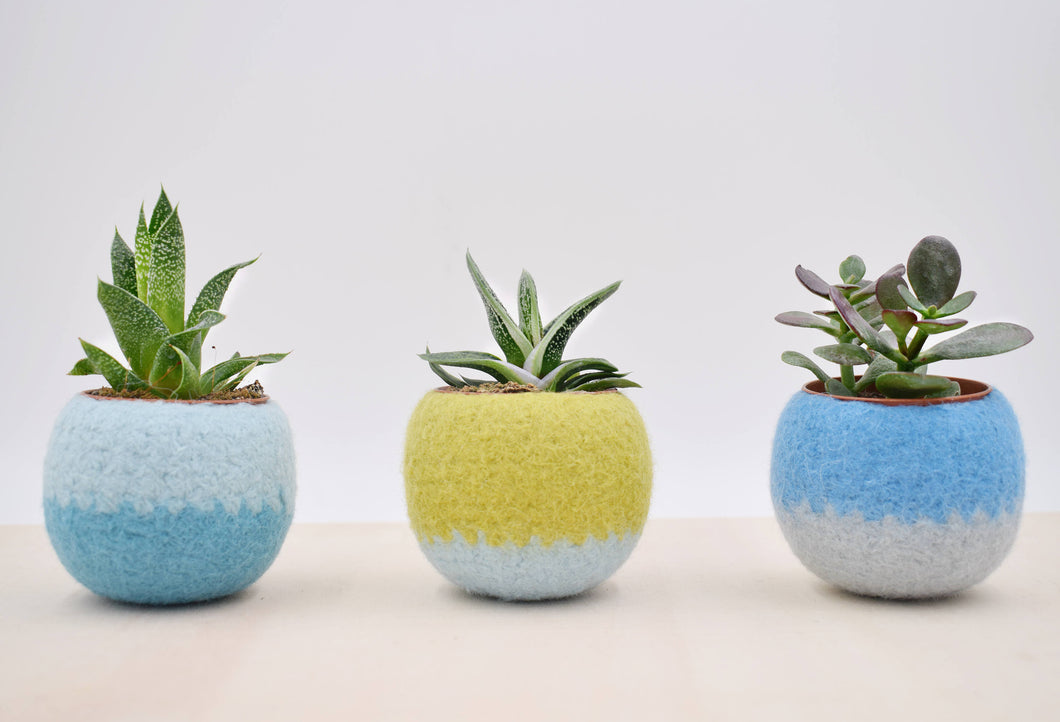 Windowsill planter/Succulent planter/Felt plant vase/pod/mother day gift/ gift for her/7th anniversary gift/Set of three